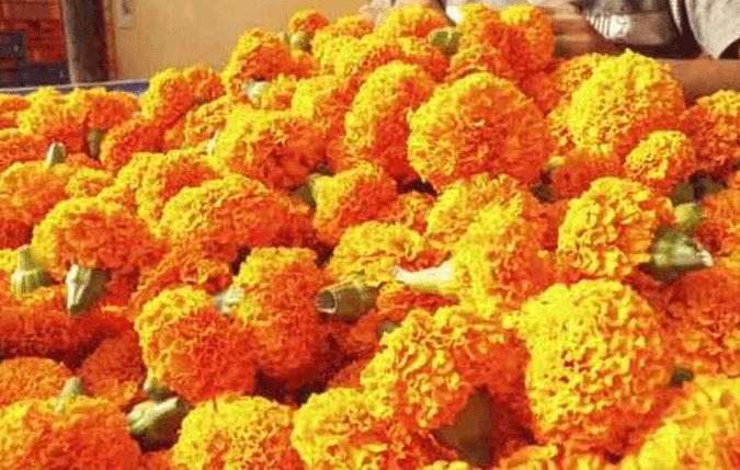झेंडूची फुले अशी विकून भरपूर नफा मिळवा