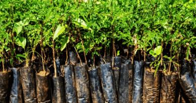 Tree Planting Grant Scheme under MGNREGA