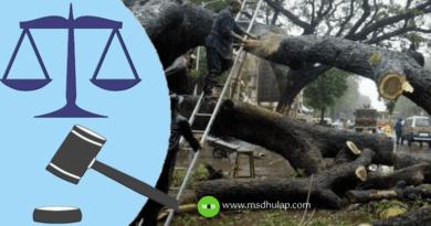 महाराष्ट्र झाडे तोडण्याबाबत शासन नियम